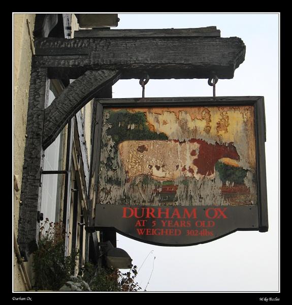The Durham Ox by oldgreyheron