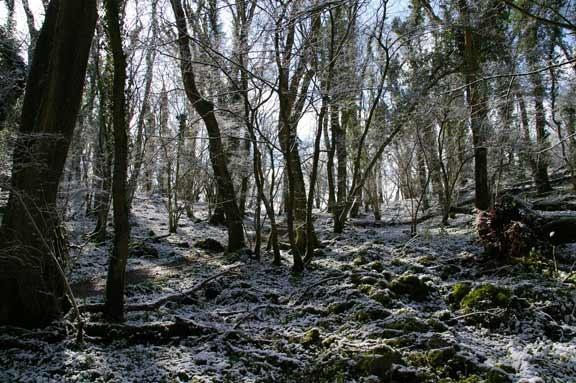 Narnia by PaulBeeTee