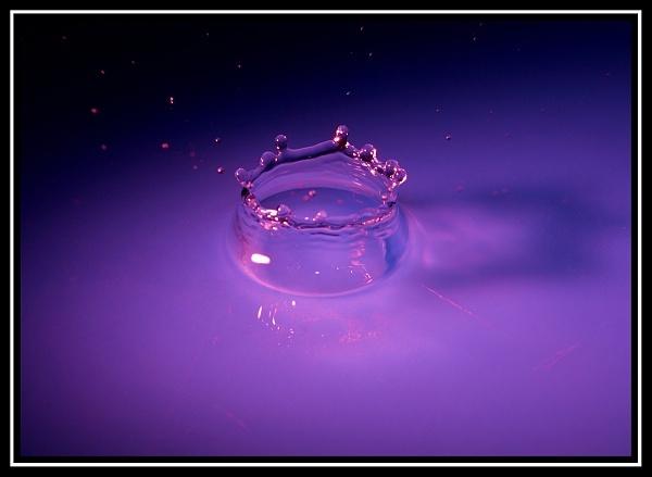 Purple Crown by PhotoFreak