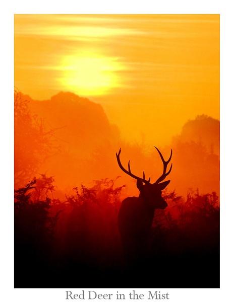 Red Deer in the Mist - Rework by WildLight