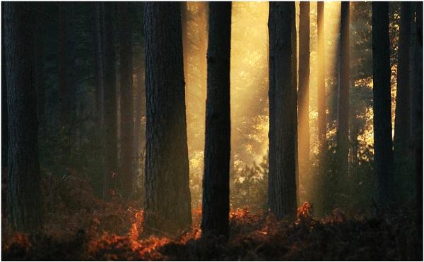 Breaking Light by lonely_oryx