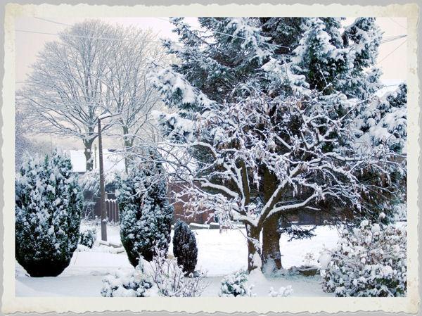 Snowfall by Stuart463