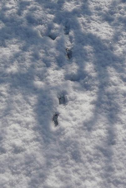 Footprints by Mintakax