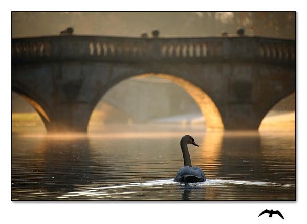Swan-Song by JamesAppleton