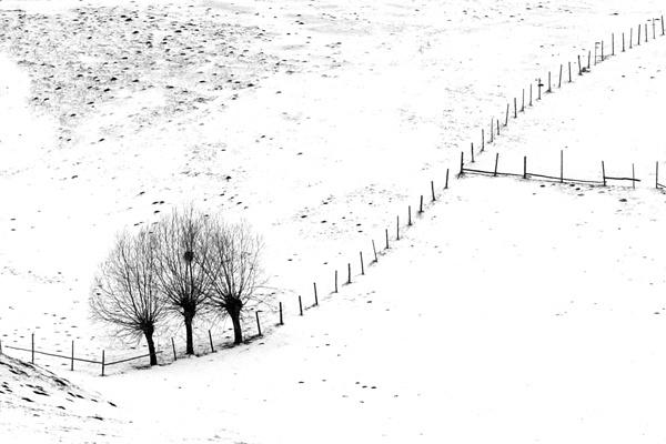 winter in black & white by jordachelr