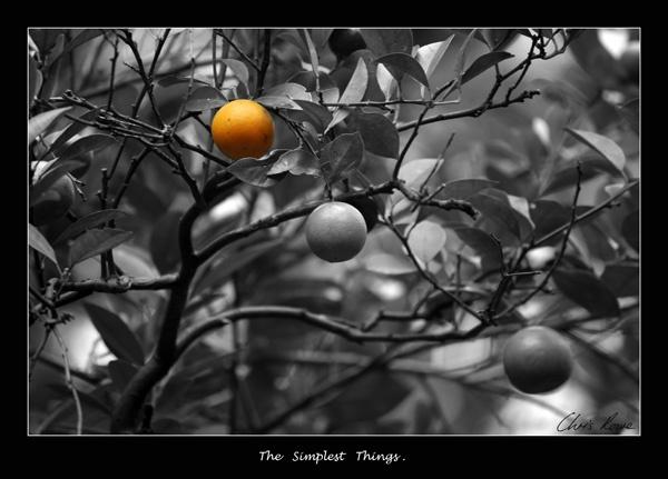 The Simplest Things. by roddersrowe