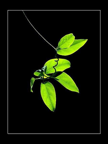 Leaves. by hoang_van