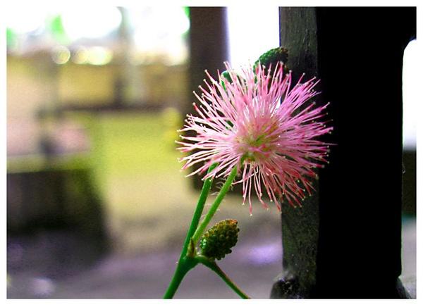 spiky flower by aquarius14