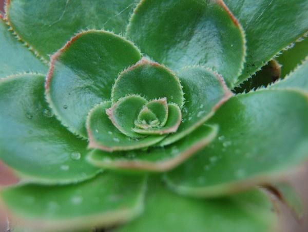 Cacti by MagdalenaS