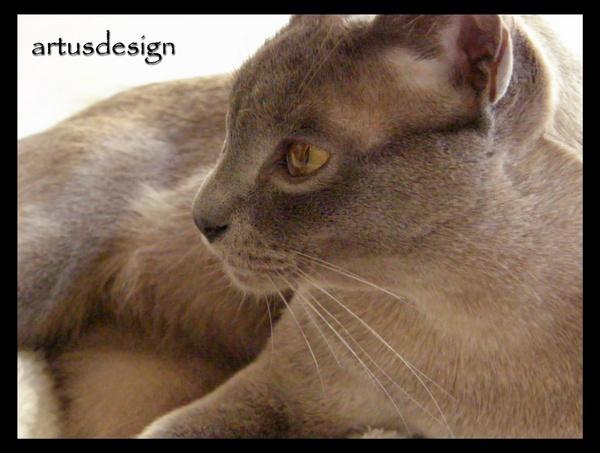 tiger by artusdesign