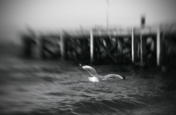 rona wharf by steve allsopp