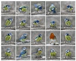 Birds 3, Tits