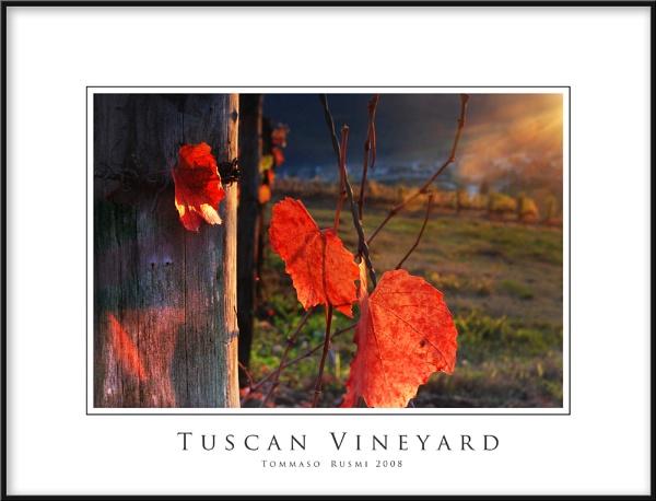 Tuscan Vineyard by rusmi