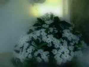 Flower by adrianj