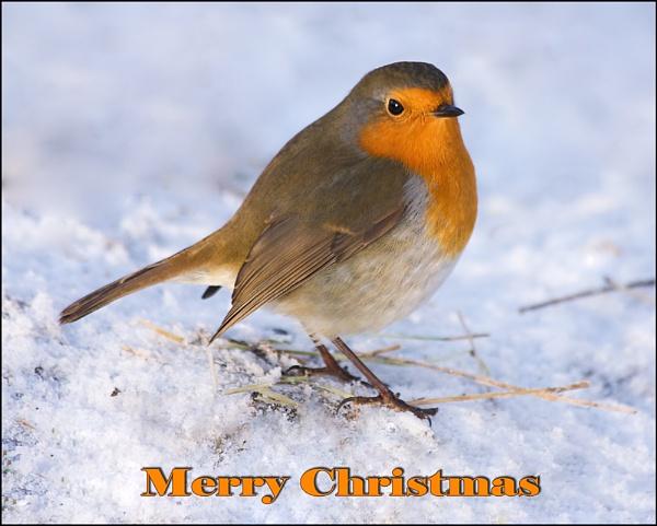Merry Christmas by Blenkinsopp