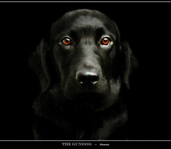 THE GUNDOG by Hanners