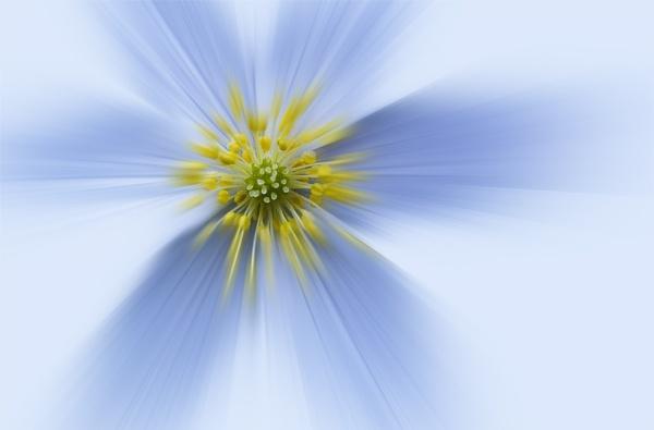 Blue blur by bfgstew