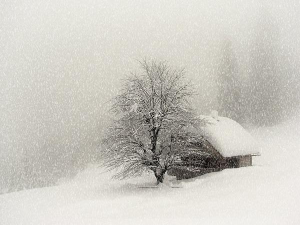 winter scene II. by joze