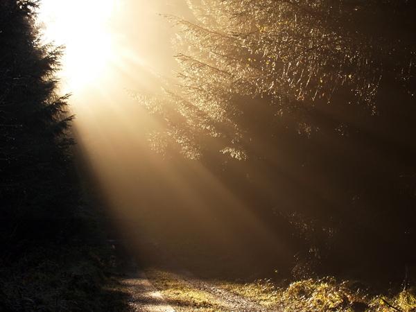 Winter Morning by Woodlander