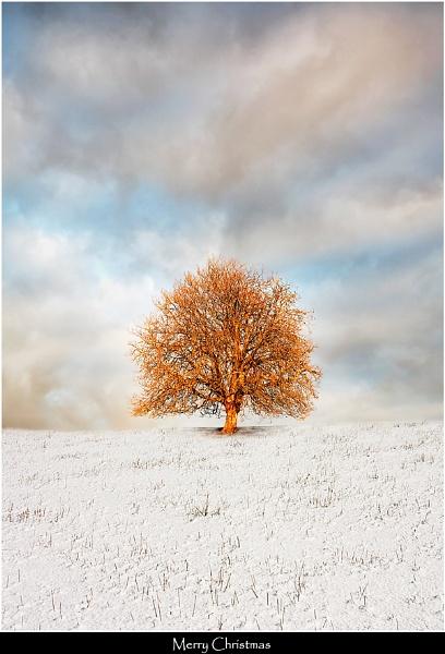 Snow Chestnut by Kris_Dutson