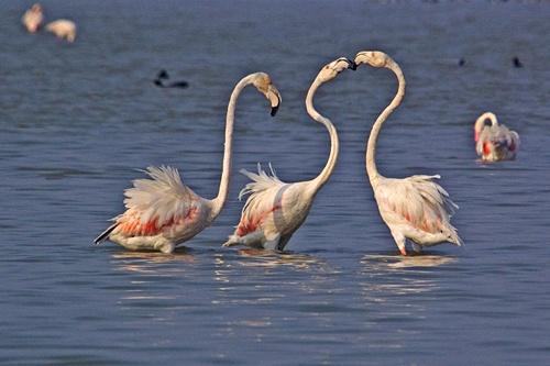 flamingo fight by wildlens