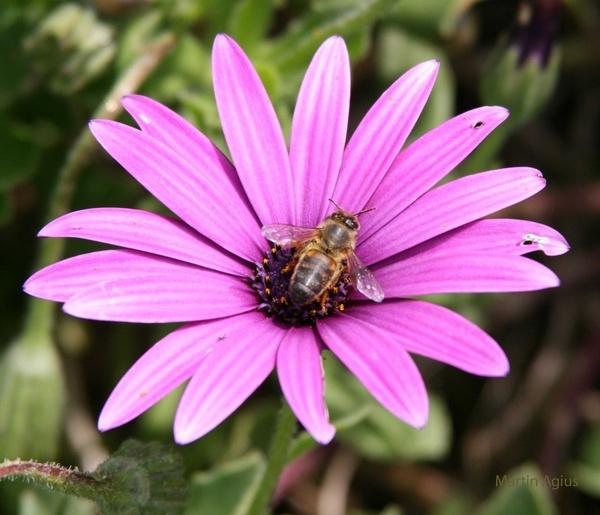 Busy Bee by MartinAgius