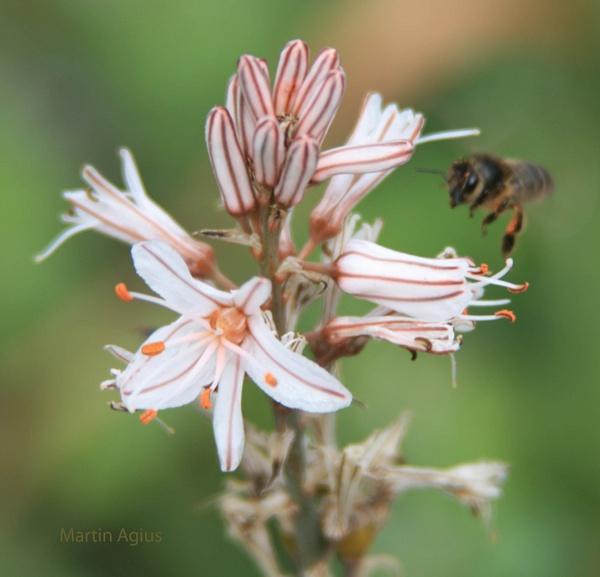 Busy Bees 4 by MartinAgius