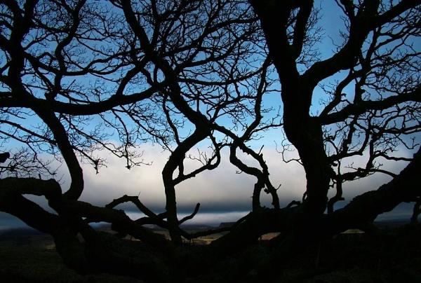 Lone Tree above Cavedale by alansdottir