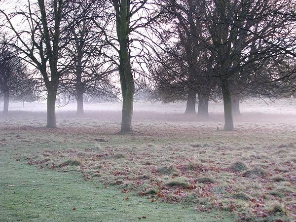 Misty by danwhite11