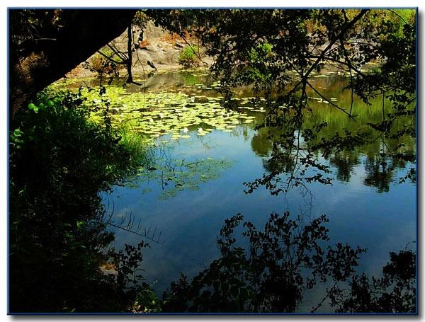 lily pond by aquarius14