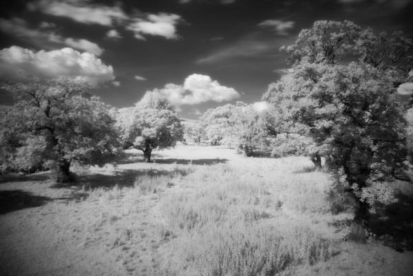 IR Tree\'s by dragarth