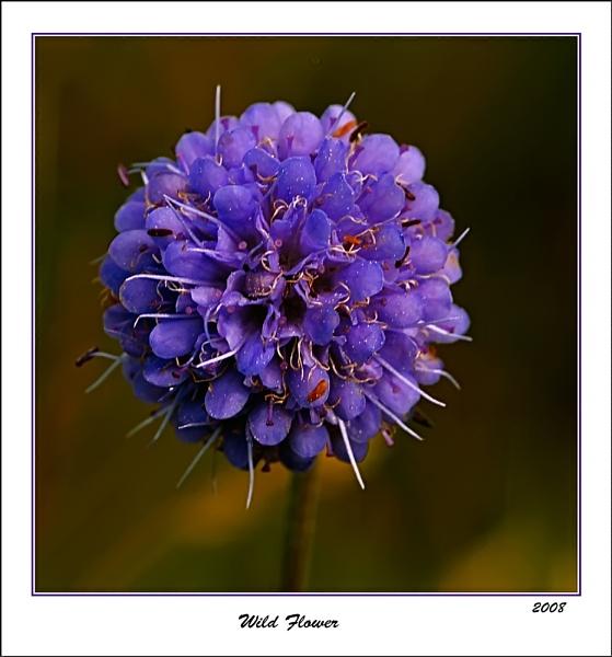 Wild Flower by Portknockie