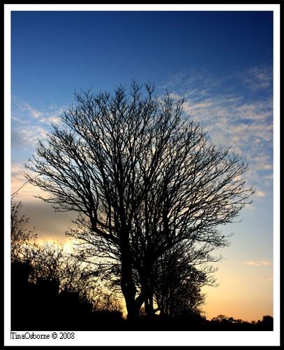 Tree hunnimoons by CornishEyes