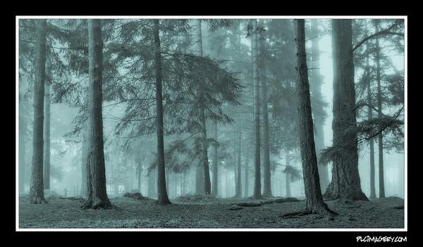 Bolderwood by PLCimagery