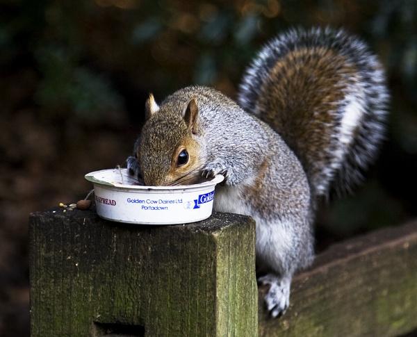 Nuts by TrevorPlumbe