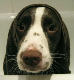Bath Babe