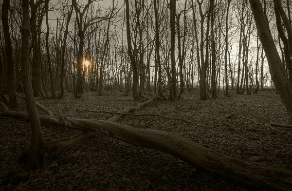 Woodland dawn by paulthepunk