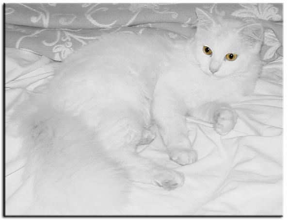 Feline Snow by FoxChick