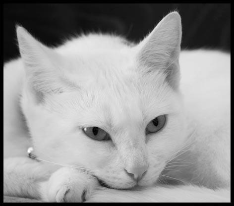 Casper by Baronred