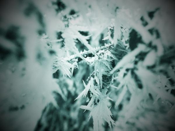- Frosty - by Borzos