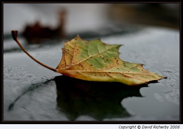 Fallen leaf (II) by DRicherby