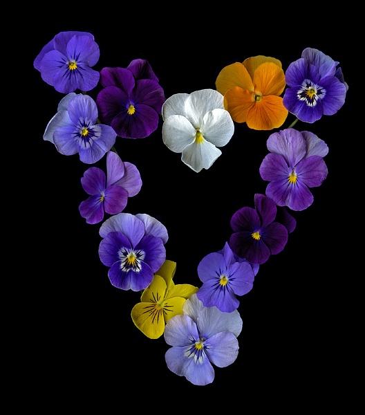 Mon cÂœur est un bouquet de violettes by magda_indigo