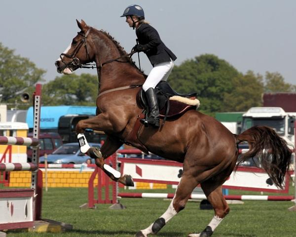 Horse Power by silburkp
