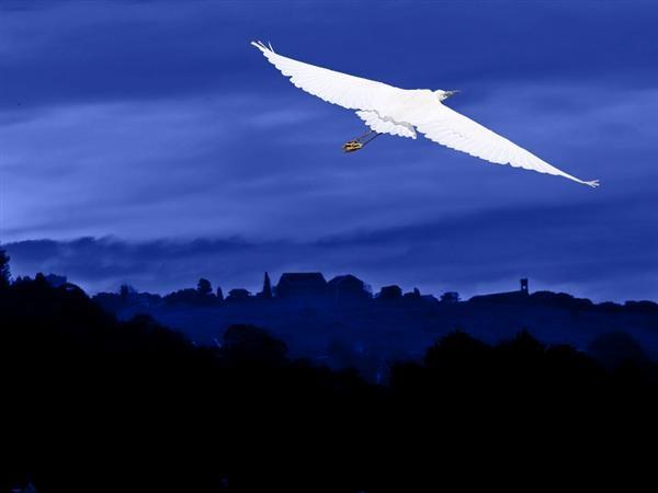 Snow White Night Flight by ShedMan