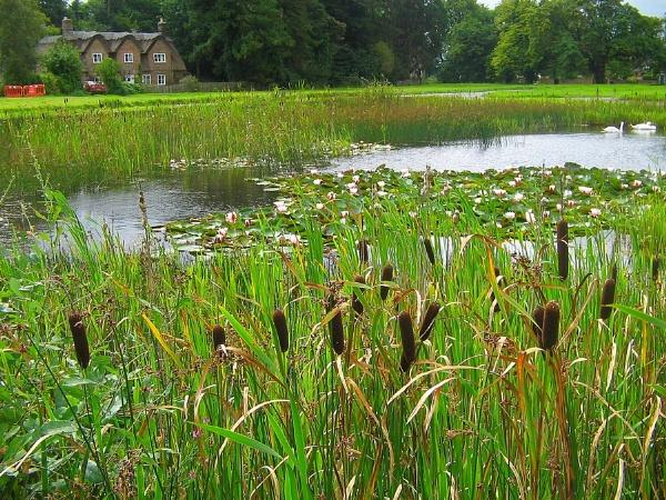 Frampton Ponds by Glostopcat