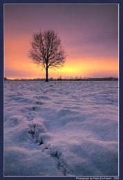 Siberian dawning