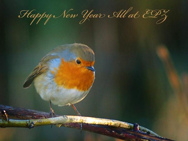 Robin by Woodlander