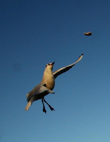 acrobatics by sav007