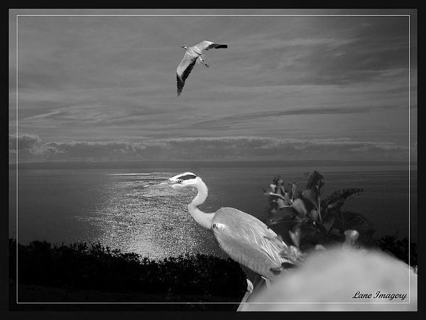 Heron coast by Mikelane