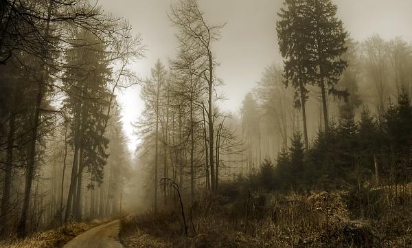 Tuetoburger Wald by Sep
